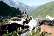 Der 26-jährige Pascal Nager mit seinen Ziegen auf der Alp Deieren im Muttental. (Bild: Christof Hirtler)