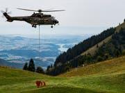 Allein die Kühe in den Waadtländer Alpen mussten während des Höhepunktes der Trockenperiode mit mehr als 3,8 Millionen Liter Wasser versorgt werden. (Bild: KEYSTONE/JEAN-CHRISTOPHE BOTT)
