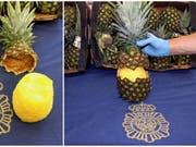 Die spanische Polizei hat 67 Kilogramm Kokain beschlagnahmt, das in ausgehöhlten Ananas versteckt war. (Bild: KEYSTONE/EPA EFE / Spanish National Police De/)