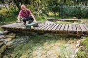 Lukas Roggensinger, Verantwortlicher für die Fischzucht der Kartause Ittingen, füttert die Regenbogenforellen im Teich. (Bilder: Reto Martin)