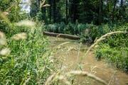 Im Murg-Auen-Park in Frauenfeld wurde der Fluss vor wenigen Jahren revitalisiert. (Bild: Donato Caspari)