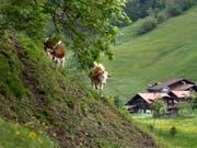 Regional und nachhaltig: Die Initiative zur Ernährungssouveränität will einen Kurswechsel für Bauern. (Bild: KEYSTONE/GAETAN BALLY)