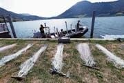 Auf dem See wird der Fischbestand mit Hilfe von benthischen (linkes Bild) und vertikalen Netzen (rechts oben) erhoben und in Ufernähe per Elektrofang (rechts unten). (Bild: Bilder: Werner Schelbert (Morgarten, 29. August 2018))