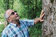 Kaum einer kennt den Seedorfer Wald so gut wie Werner Arnold. (Bild: Remo Infanger, Seedorf, 27. August 2018)