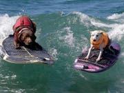 Es gibt nichts, was es nicht gibt: In Kalifornien fand am Wochenende die Weltmeisterschaft im Hundesurfen statt. (Bild: KEYSTONE/EPA/MIKE NELSON)