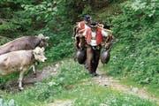 Das «Öberefahre» ist für Sennen und Tiere streng, die Tradition wird aber bewahrt. (Bild: PD)