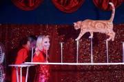 Beim Duo Kosse sind Katzen die Stars. (Bild:PD)