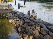 Diessenhofer Fischer fischen die Rückzugsgebiete am Rheinufer ab und setzen die Fische im Geisslibach wieder aus. Die dortigen Wassertemperaturen ermöglichen den Fischen das Überleben. (Bild: Stadtgemeinde Diessenhofen)