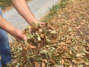 Herbstliches Laub mitten im Sommer: Die Wälder sind so trocken, dass das Waldbrandrisiko im Kanton St. Gallen auf die höchste Stufe erhöht wurde. (Bild: KEYSTONE-SDA/Nathalie Grand)