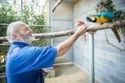 Walter Mauerhofer mit seinen Ara-Papageien. (Bild: Reto Martin)