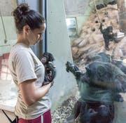 Das Muttertier Balima ist brennend interesasiert am Affenbaby. (Bild: pd)