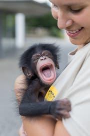 Das Schimpansenbaby und Tierpflegerin Gaby Indermaur. (Bild: pd)