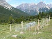 Im Schweizerischen Nationalpark untersuchten WSL-Forschende mithilfe von Zäunen, welche Rolle Tiere verschiedener Grösse für das Ökosystem einer Wiese spielen. (Bild: Anita Risch / WSL)