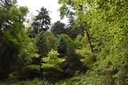 Auch ohne FSC-Zertifizierung wird Holz aus Schweizer Wäldern weiterhin nachhaltig und umweltgerecht produziert. (Bild: Urs M. Hemm)