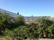 Links das Tropenhaus, in der Mitte vorne verdeckt durch viel Grünzeug die gegen die Sonne geschützten Anzuchtgewächshäuser und hinten das Orchideenhaus. An die Stelle der drei alten, niedrigen Gewächshäuser kommt ein Neubau mit Vortrags- und Schulungsraum. (Bild: Reto Voneschen - 12. September 2018)