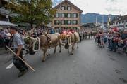 Im vergangenen Jahr zog die Alpabfahrt in Kerns zahlreiche Besucher an. (Bild: André A. Niederberger, Kerns, 30. September 2018)