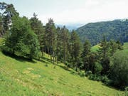 Den Föhrenweidewäldern, wie hier in Evasberg in Mosnang, kommt im WEP Nummer 17 eine besondere Bedeutung zu. (Bild: PD)