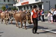 Alpabfahrt: Die Bauern ziehen mit ihren Herden den heimatlichen Höfen entgegen. (Bilder: PF)