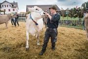 Stolz präsentieren die Landwirte an der Viehschau ihre Kühe. (Bild: Ralph Ribi)