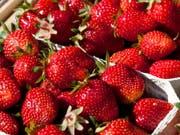 Australische Behörden sind alarmiert: In Supermarkt-Erdbeeren wurden Stecknadeln gefunden. (Bild: KEYSTONE/AP dapd/MICHAEL LATZ)