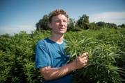 Statt Land zu pachten, geht Erich Gerschwiler Partnerschaften mit Landwirten ein. So verfügt er bereits über 7000 Hanfpflanzen, die in der ganzen Region verteilt sind. (Bild: Ralph Ribi)