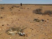 Die Geldpreise gehen an den Bauern Yacouba Sawadogo aus Burkina Faso und den Australier Tony Rinaudo, die sich beide dafür einsetzen, dass dürres, unfruchtbares Land in Afrika landwirtschaftlich genutzt werden kann. (Bild: KEYSTONE/EPA/DAI KUROKAWA)