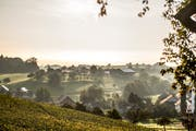 Der Thurgau hat auch im Herbst zumindest optisch viel zu bieten. Im Bild der morgendliche Blick über Hagenwil. (Bild: Thi My Lien Nguyen)