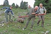 Auch dieses Jahr müssen die Grabser Jäger einen grossen Anteil am Hirschabschuss leisten. (Bild: Markus P. Stähli/wildphoto.ch)