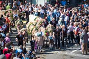 Dieses Bild darf sich am kommenden Samstag wiederholen: In Schüpfheim werden die Älplerfamilien begrüsst. (Bild: Roger Grütter, 24. September 2016)