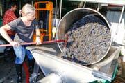 Rahel Schwyter führt die Trauben der Abbeermaschine zu; Saft und Maische werden in die Tanks im Hintergrund gepumpt.(Bild: Rudolf Hirtl)