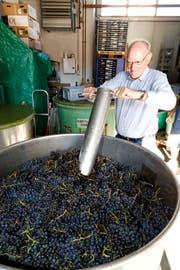 Weinfachmann Hans Frei nimmt eine Probe und kontrolliert mit dem Refraktometer den Zuckergehalt der Pinot noir-Trauben. (Bild: Rudolf Hirtl)