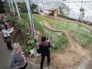 Erst im vergangenen März eröffnete das Tropenhaus Wolhusen die einzigen Reis-Terrassen der Schweiz - nächstes Jahr stellt es seinen Betrieb ein. (Bild: KEYSTONE/URS FLUEELER)