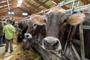 Kühe werden am Samstag in Neuheim im Fokus sein. (Bild: Christian H. Hildebrand)