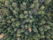 Luftaufnahme des Säliwaldes in Ruswil. (Bild: Pius Amrein, 23. Oktober 2017))