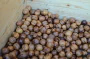 Reiche Ernte - Hans Oppliger mag die Nüsse am liebsten pur als Nusskerne - es gibt aber auch jede Menge Delikatessen, deren Grundlage sie sind. (Bild: Jessica Nigg)