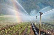 Im Rheintal sind vor allem die Gemüsebauern auf Bewässerungen angewiesen. (Bild: Nana do Carmo)
