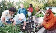 Migranten und Einheimische arbeiten gemeinsam (von links): Agos Mogos aus Eritrea, Paul Ackermann (Präsident Verein Vitas), Albert Egger (Kassier Verein Vitas) und Bule Kaltu aus Somalia mit Tochter Ramla. (Bild: Susi Miara)