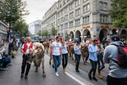 Mit Kühen mitten durch Zürich. Das Toggenburger Modelabel Stockberg machte am Samstag kein gewöhnliches Fotoshooting. (Bild: Christian Regg)