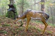 Unblutige Jagd: Beim 3D-Bogenschiessen geht es um die Zielgenauigkeit, nicht die Trophäe. (Bild: Philipp Schmidli (Mörlialp, 29. September 2018)