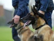 Mit Spürhunden und Lautsprecherwagen suchten die Einsatzkräfte bei Cuxhaven nach einem Fünfjährigen - er tauchte dann unter dem elterlichen Sofa auf. (Bild: KEYSTONE/URS FLUEELER)