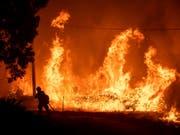 Wegen hunderter Brände hat die Feuerwehr in Kalifornien ihr Jahresbudget innert zwei Monaten fast aufgebraucht. Auf dem Bild Flammen des Delta-Fire im Shasta-Trinity Nationalforst. (Bild: KEYSTONE/FR34727 AP/NOAH BERGER)