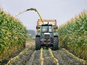 Mit einer Studie will die Denkfabrik Avenir Suisse eine Diskussion über die Agrarpolitik und den Abbau des Grenzschutzes für Lebensmittel anregen. (Bild: KEYSTONE/GAETAN BALLY)