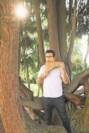 Der Flötenspieler und der Baum: Die imposante Scheinzypresse im Luzerner Dreilindenpark ist ungefähr 90 Jahre alt. Hanspeter Oggiers Sopran-Panflöte ist aus Bambus und erst vergangenen Dezember eingeweiht worden. (Bild: Boris Bürgisser (4. Sept. 2018))