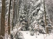 Winterwunderland im Guggeienwald. (Bild: Daniel Walt)