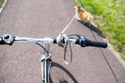 Kleiner Hund angeleint ans Velo: Dabei muss der Hundehalter besonders auf das Tier achten. (Bild: GettyImages)