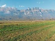 Dieses Gebiet zwischen Haag und Sax möchte der Verein Pro Rheintal ökologisch aufwerten. (Bild: Verein Pro Riet Rheintal (November 2018))