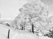 Eine bezaubernde Winterlandschaft auf der Rigi. (Leserbild: Markus Brülhart (Rigi, 10. Januar 2019))