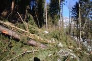 Im Gamser Wald, der vom Sturm «Burglind» besonders stark betroffen war, wurde besonders viel «Käferholz» verzeichnet.. (Bild: Corinne Hanselmann)