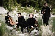 Das Goldmund-Quartett aus Deutschland. (Bild: PD)