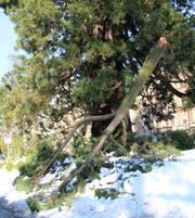Nassschnee kann auch bei grossen und starken Bäumen zu Astbrüchen führen. (Symbolbild: Reto Voneschen - 25. April 2017)